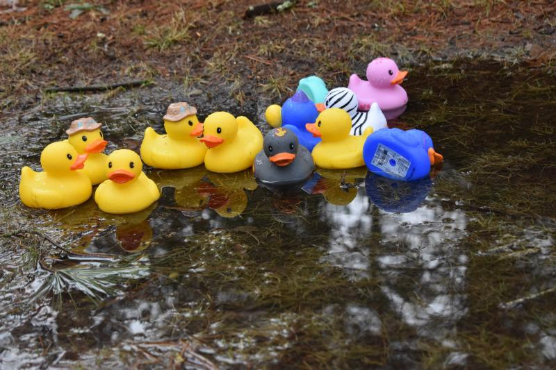 Neighbor\'s good-natured prank creates \'duck pond\' in Rochester ...